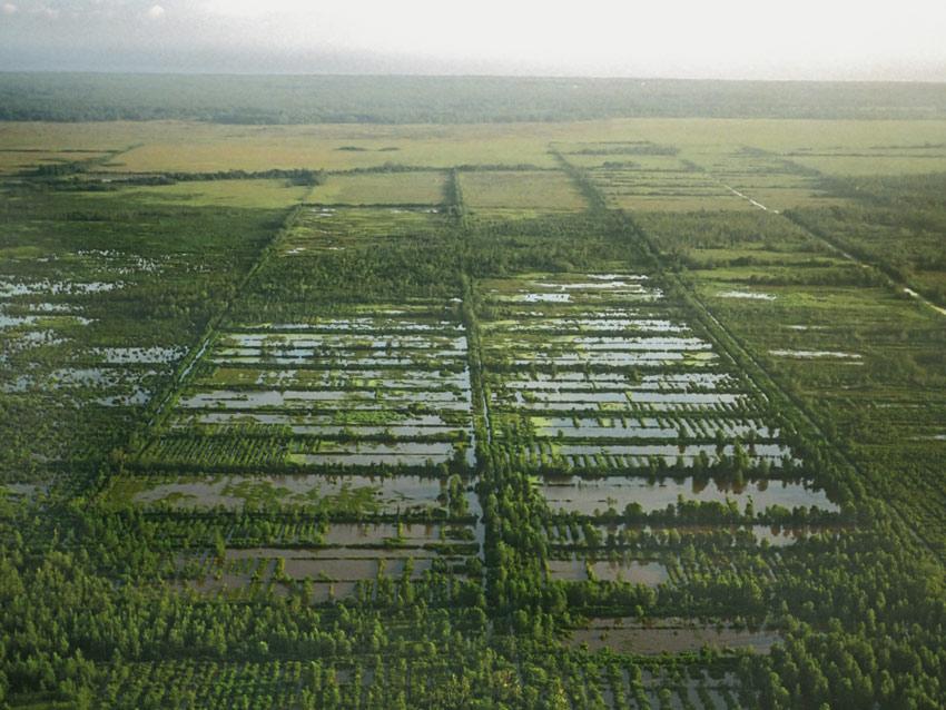 Agriculture précolombienne dans les Guyanes (2/3)